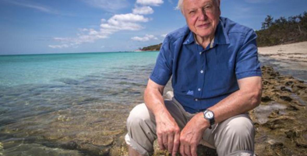 Jövőre jön David Attenborough új sorozata