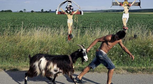 hogyan látja a kecske a látást