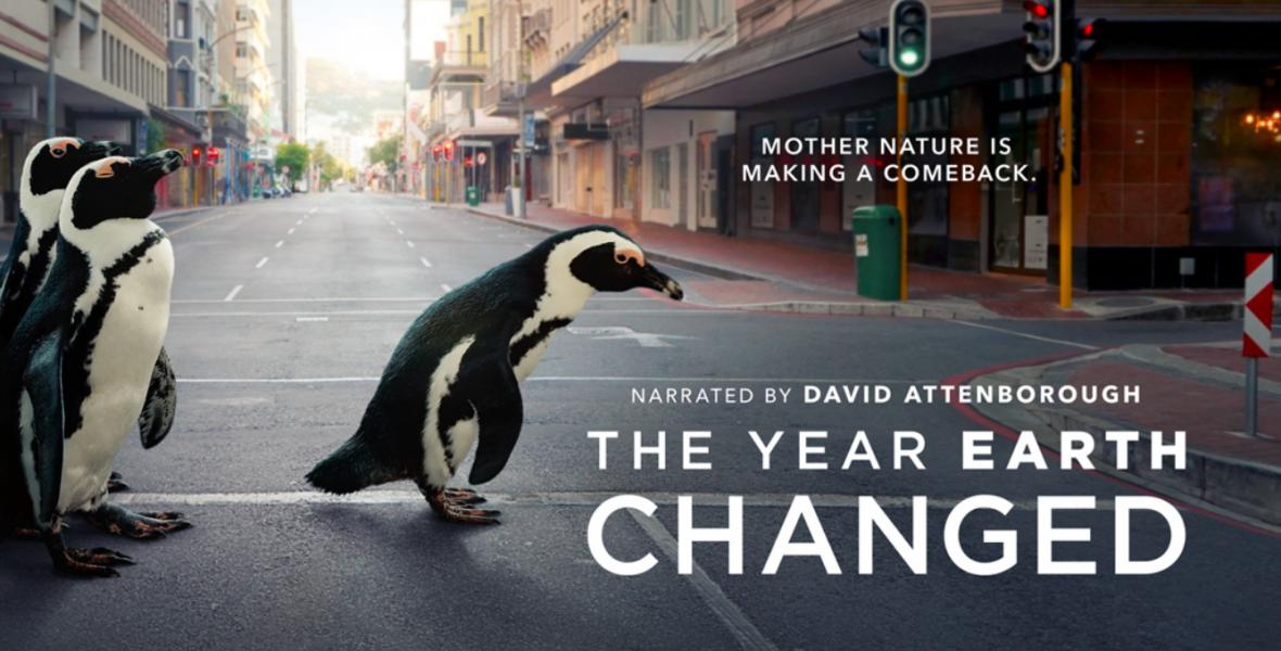 David Attenborough elmeséli, mi történt a természettel, míg mi karanténban ültünk